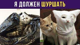 Приколы с котами. Я должен шуршать   Мемозг #15