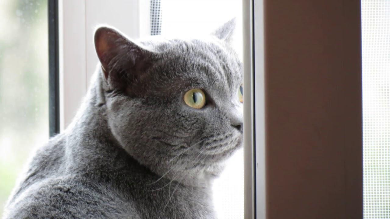 Как выгнать кота с квартиры