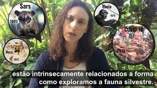 Mensagem da Freeland Brasil Sobre o COVID-19 e o comércio de animais silvestres