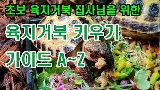 반려동물 육지거북키우기 초보 거북이 집사님을 위한 육지…