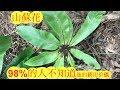 (山蘇花)的药用价值。 medicinal uses of the bird's-nest fern。Daun semun。