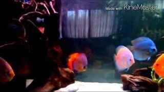 Интерактивный аквариумный туризм №21 (Update)(Рубрика, куда вы присылаете свое видео и описание аквариума, а мы делаем из этого выпуск. Тема для Заявок:..., 2015-04-14T21:06:49.000Z)