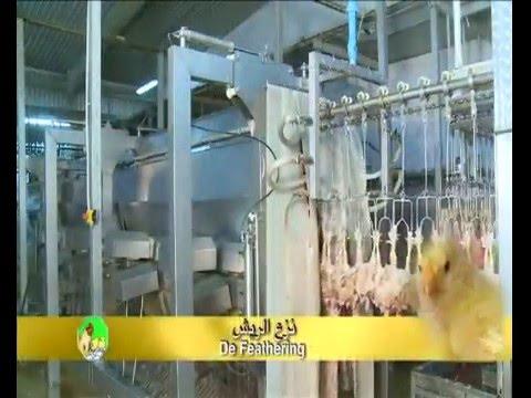 Poultry Production - Arab Qatari Co.-