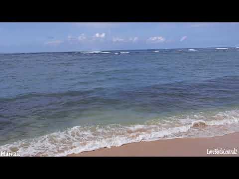 Turtle Sighting | Ocean Waves | Hawaii | Relax | Meditate | LoveBirdsCentral2 #14
