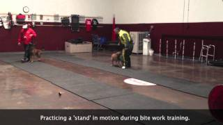 Protection K9 Dog Obedience Dog Training | Sit Means Sit