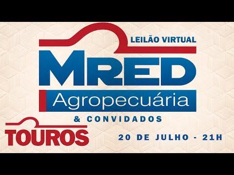 Lote 06 (Milk da FLG - MRED 667 / Lambu da FLG - MRED 625)
