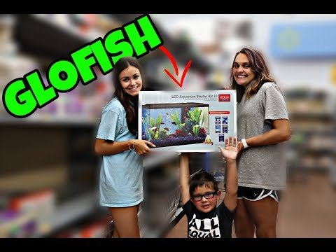 GloFish Aquarium And Connecting It To Google Home (Buying Fluorescent Fish)