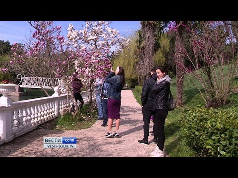 Цветение магнолии Суланжа привлекает туристов в Сочи