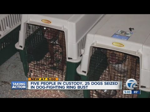 Michigan State Police Seize 25 Dogs,drugs & Equipment During Two Dog Fighting Raids