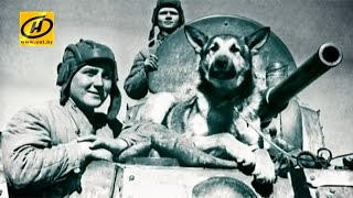 Собаки-подрывники - четвероногие герои Второй мировой