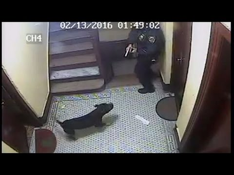 Officer Fatally Shoots Happy Dog, Owner Plans To Sue [CAUGHT ON TAPE]