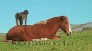 The Incredible Bond by Rebecca Ziegler When baboons start riding horses....!  A remarkable story of companionship between a wild baboon and a horse named Jericho.  Location: Animal Alley - Garden Route - South Africa Wildlife Film Course at Beyond Borders Film School 05th July - 04th August 2014