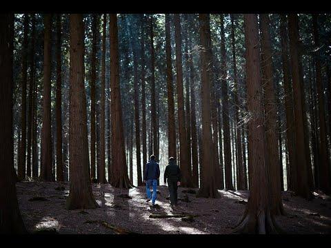 Samen planten we 5 miljoen bomen | Staatsbosbeheer & Shell