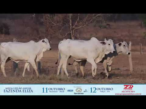 LOTE 181