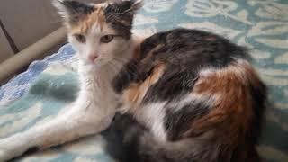Новенькая кошечка Пятерочка!Котик  Магнит уже есть у одного  мужчины рыжий без лапки.