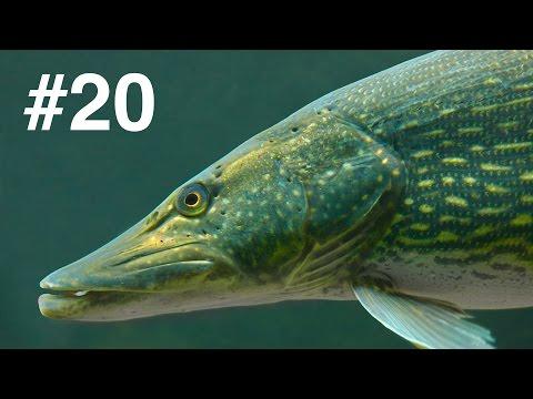 Подводная охота ЛУЧШИЕ моменты 2015