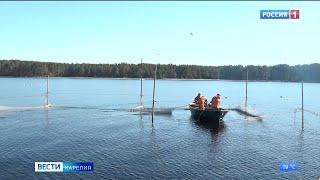 На Ладожском озере завершается весенний лов рыбы