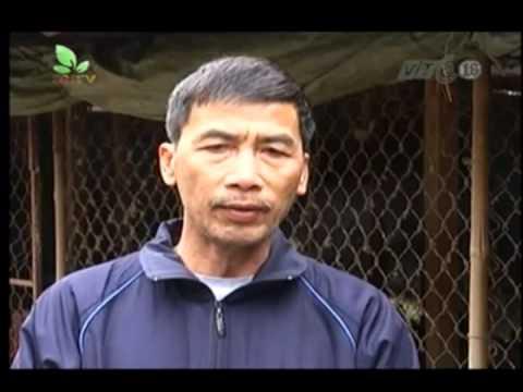 Mô hình chăn nuôi gà Hồ của HTX Cường Thịnh Bắc Ninh