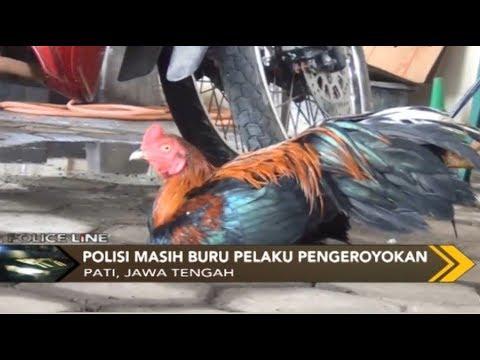 Ketahuan Curi Ayam, Seorang Pemuda Tewas Dikeroyok Warga - Police Line 13/01 Mp3