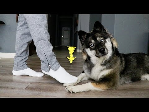 """""""accidentally""""-stepping-on-my-dogs-foot-to-many-times!"""