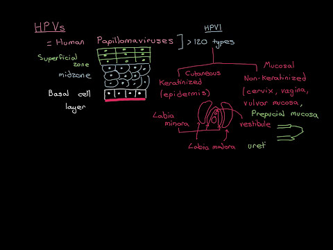 HPVs and Cervical Cancer Part 4