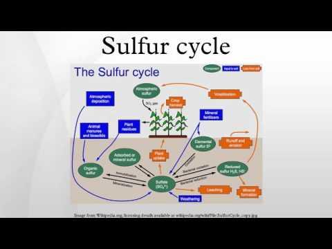 Sulfur Cycle Diagram Simple