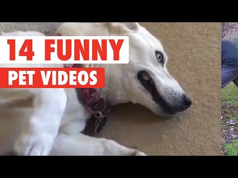 14 Funny Pet Videos Video Compilation 2016