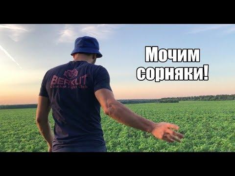 СОЯ Vs Сорняки