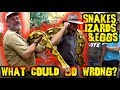 Snakes, Lizards, Eggs, & BMX What Could Go Wrong? *UPDATE VIDEO*