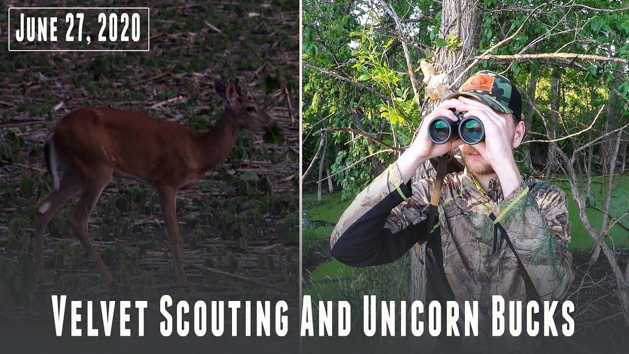Summer Velvet Scouting and Unicorn Bucks!?!