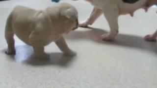 おっかさん、子供のおもちゃを持ち去る(^'^)