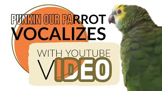 Punkin (our Parrot) Does Warm Up Exercises with Voice Teacher on YouTube