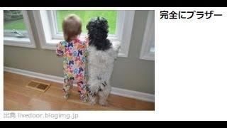 Twitter(ツイッター)で人気のいぬ動画2 A dog animation popular at ...