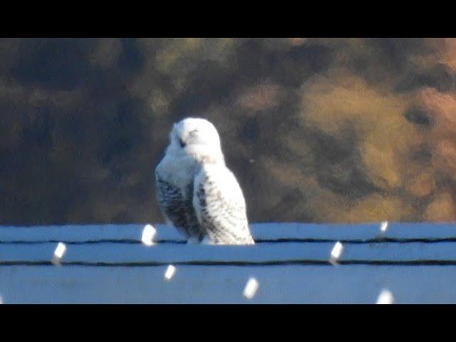 1430 Connection / Maryland Bird Conservation Partnership (Chris Eberly)