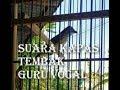 Kapas Tembak Guru Vocal Saja  Mp3 - Mp4 Download