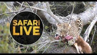 safariLIVE - Sunset Safari - July 13, 2018 thumbnail
