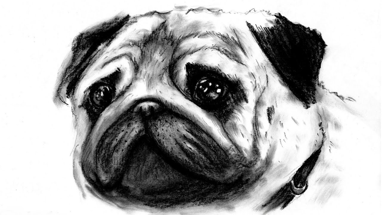 disney pets mel realistic pug disegnare un carlino speed drawing