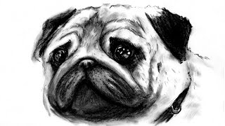How to draw pet PUG dog  -  Come disegnare un cane CARLINO ( speed drawing )
