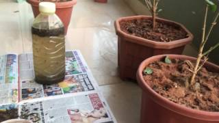 Homemade Tea Fertiliser