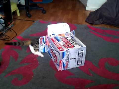 Cat Basketball blooper reel 2