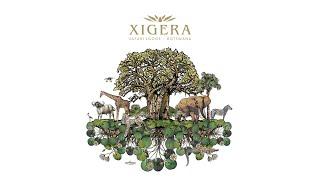 Introducing Xigera Safari Lodge