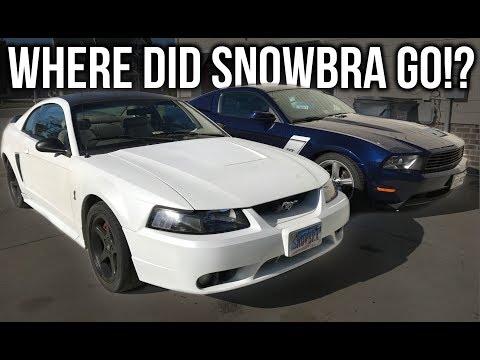 Where Did SNOWBRA The $500 COBRA GO!?