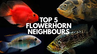 These Fishes may suit with your Flowerhorn...