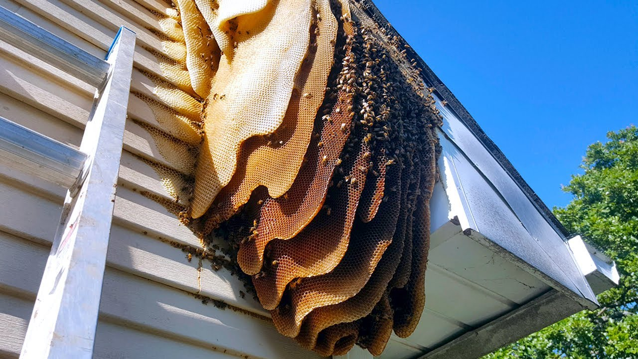 15 Worst Bug Infested Houses