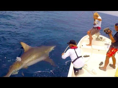 2時間余りの死闘の末、ついに200キロクラスのサメを釣る!【200キロサメ討伐#2】