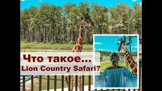Что такое - Lion Country Safari? / Жизнь в США. Майами.