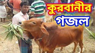 কুরবানীর গজল | কুরবানীর ঈদ গজল | Qurbani Song | Qurbani Gojol Bangla | New Bangla Eid Gojol 2019