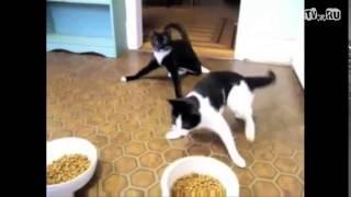 Коты под валерьянкой dubstep из  +100500