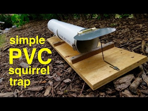 how-to-make-●-a-humane-pvc-squirrel-trap-(that-works!)