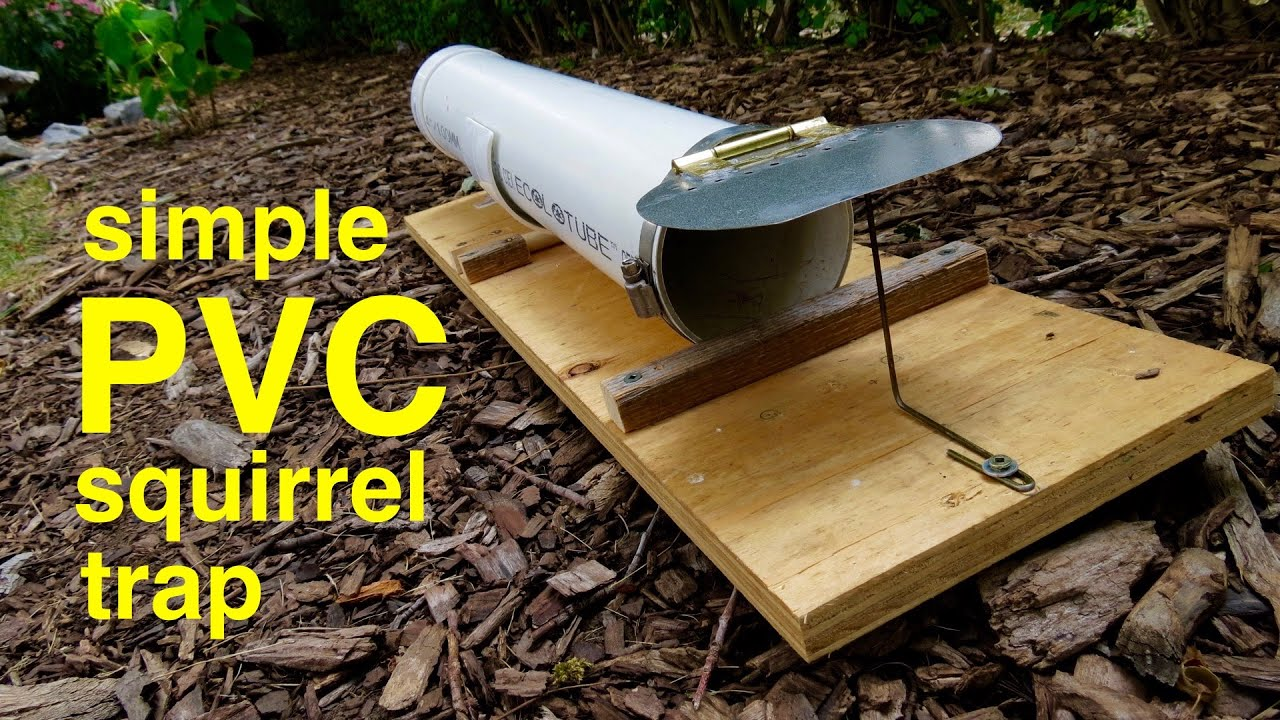 How To Make A Humane Pvc Squirrel Trap That Works